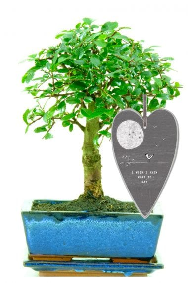 I wish i knew what to say bonsai tree gift