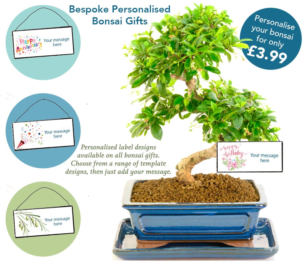 personalise you bonsai gift for only £3.99