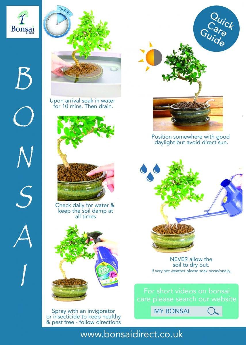 Bonsai Help Q A Archives Bonsai Trees For Sale Uk