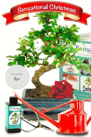 Sensational flowering Christmas gift set for sale