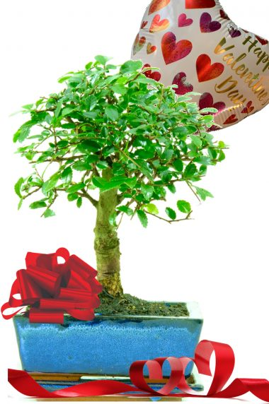 Happy Valentines Day unusual & unique indoor bonsai gift